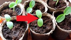 Diseases and pests of seedlings - how to recognize and fight La Germination, Egg Shells, Planter Pots, Succulents, Vegetables, Flowers, Plants, Couches, Gardening