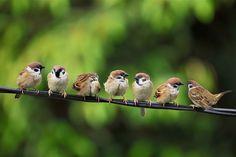 Join the World's Best Photo Contests Animals And Pets, Cute Animals, Sparrow Bird, Brown Bird, Tier Fotos, Backyard Birds, Bird Pictures, Little Birds, Bird Watching