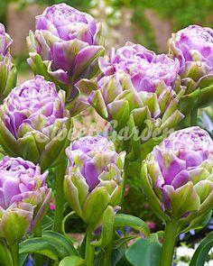 Lalele Violet Prana   Sweet Garden Vegetables, Sweet, Garden, Sun, Plant, Candy, Garten, Lawn And Garden, Vegetable Recipes