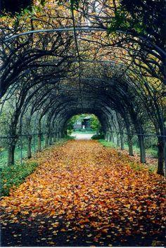 Foxglove Spire Gardens ~ Attractions Arts Craft Wineries Holidays Merimbula NSW Australia