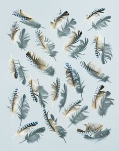 "David Lidbetter's ""Feather"" Series"