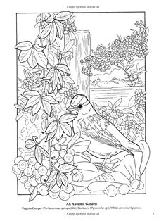 Creative Haven Beautiful Birds Coloring Book SAMPLE PAGE 1 Welcome