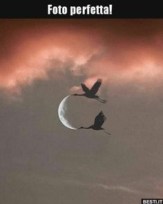 Wonderful World of sunset Creative Pictures, Cool Pictures, In Natura, Beautiful Moon, Something Beautiful, Stars And Moon, Aesthetic Pictures, Mother Earth, Pet Birds
