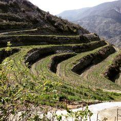 #TerroirCyprus #Tsiakkas #Winery #Troodos Mountain