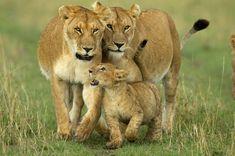 Gondwana Tours & Safaris