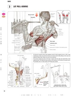 Training Anatomy - Back - Lat Pull-Downs Weight Training Workouts, Gym Workout Tips, Pilates Workout, Easy Workouts, Fitness Exercises, Training Tips, Latissimus Dorsi Exercises, Forearm Workout, Muscle Building Tips