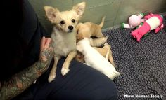 3.10.16 - Shelter Dog Reunited with Her Puppies Is Melting Hearts Everywhere1