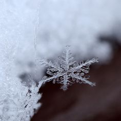 Imagine what it would be like to a snowflake. Write about a day in the life of a snowflake.