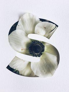 Bold and Botanical   Bringing an extra dimension to decorative type,Julia Losfelt