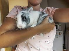 Small babybunny, Cookie