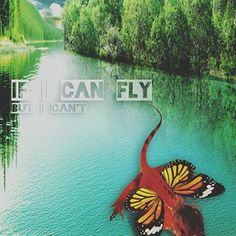 If i can fly... Pet lover, pet seller and video creator and editor.Follow @fantasypetgraph , share,tag your friends... To get more update and subscribe our new youtube channel, and watch our clips #iguana #iguanapontianak #iguanaindonesia #iguanalovers #iguanagram #iguanaindonesia #iguana #iguanalovers #animals #animal #animalovers #reptileindonesia #reptile #reptileworld