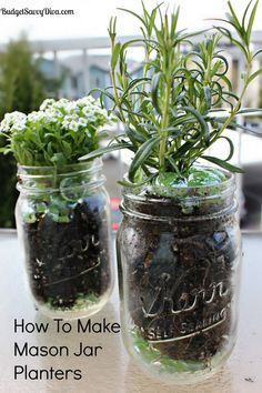 """Done in 5 minutes - Easy way to have herbs in the kitchen! Line the bottom of a mason jar with glass beads or marbles, then layer in potting mix, and then add the plant, and top with more glass beads. The photo shows Alyssum and Rosemary - and while Alyssum may seem like an odd choice for an """"herb garden"""" it would be pretty in a kitchen, and does well with irregular watering - always important!"""