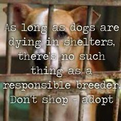 So tired of seeing people saying they are looking for a certain breed and willing to pay a stupid amount for that breed. ADOPT. Many shelters offer spay/neuter with the adoption.