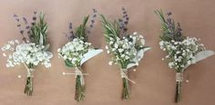 buttonholes senecio - Google Search