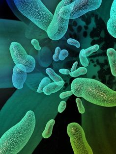 'Hidden' diversity of oral bacteria revealed in new study