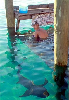 Ah!Me: It's ok baby I'm here, these kind of shark's won't hurt you. Justin: you're freakin lying, No! dont take a pic. Ok, but make sure not to tell anyone that the water around me are from my tears.