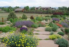 Steal these cheap and easy landscaping ideas for a beautiful backyard. Get our best landscaping ideas for your backyard and front yard, including landscaping design, garden ideas, flowers, and garden design. Texas Landscaping, Small Front Yard Landscaping, Backyard Landscaping, Landscaping Ideas, Sidewalk Landscaping, Backyard Ideas, Landscaping Blocks, Inexpensive Landscaping, Landscaping Software