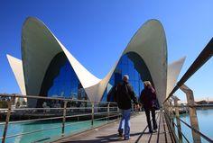 Oceanogràfic. Ciudad de las Artes y las Ciencias. Valencia. www.cac.es