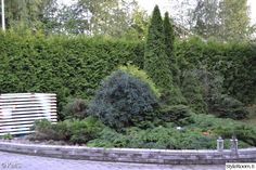 puutarha,piha,kivetys