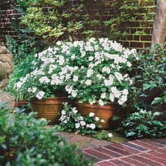 White Impatiens—Use white to lighten your garden. Pots of white impatiens brighten this shady corner with hundreds of blooms. | SouthernLiving.com