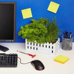 Un petit jardin pour votre bureau