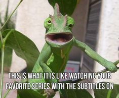 18+ Funny Animal Memes to Brighten Your Sunday #animalmemes