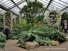 Behind the Scenes at the Kew Orchid Extravaganza 2017 - Pumpkin Beth Kew Gardens, Botanical Gardens, Growing Plants, Wonderful Places, Planting, Orchids, The Good Place, Behind The Scenes, Pumpkin