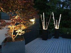 Beleuchtete Birkenstämme und Japanischer Ahorn auf der Dachterrasse Klagenfurt, Plants, Roof Terraces, Grill Area, Lawn And Garden, Plant, Planets