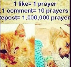 Stop Animal Abuse!!!!
