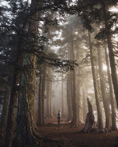 'Wisdom begins in wonder.' - Socrates  PC: cameronleeanderson at Summit Lake by tentree