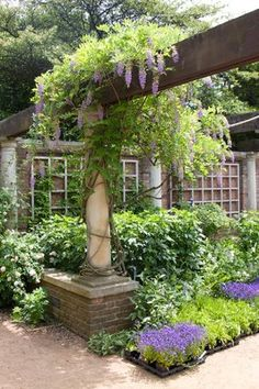 Wisteria and other p