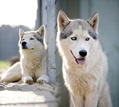 Doggy style by Stefan Fuhrmann on 500px