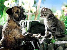 Sweet friends - Cats Wallpaper ID 1169459 - Desktop Nexus Animals