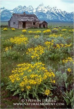Grand Tetons, Wyoming - one of our most favorite and memorable family vacations....
