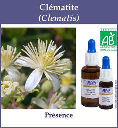 Clematite 4 Gaia, Elixir Floral, Agriculture Biologique, Boutique, Remedies, Essential Oils, Gardens, Flowers, Feel Better