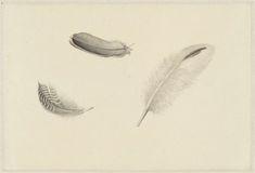 Dirk Salm | Studie van drie veren, Dirk Salm, 1813 - 1838 |