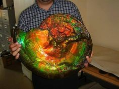 I present to to you: a gigantic opalized ammonite fossil..... Geology Wonders