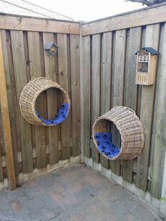 Relaxy time for kitties – – Familie Ertmer – Cat playground outdoor Animal Room, Outdoor Cat Enclosure, Diy Cat Enclosure, Reptile Enclosure, Cat Run, Cat Shelves, Cat Playground, Outdoor Cats, Outdoor Cat House Diy
