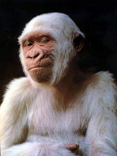 gorille albinos zoo de barcelone - Recherche Google