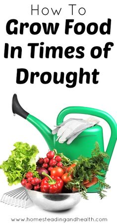 How to grow food in times of drought.