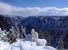 帶著白色愛犬的全國大冒險