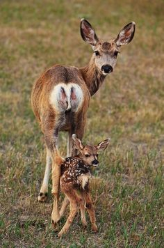 doe with baby by mike roan