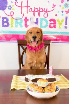 101 Funny Happy Birthday Dog Memes for Paw Lovers Everywhere Happy Birthday Dog Meme, Happy Birthday Cupcakes, A Birthday Party, Cool Birthday Cakes, Dog Birthday, Birthday Ideas, Birthday Memes, Husband Birthday, Birthday Pictures