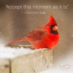 Accept this moment as it is. Eckhart Tolle. Present moment reminder.