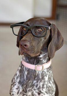 GSP in glasses.