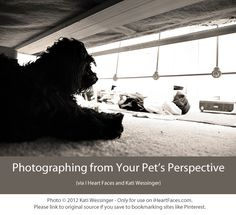 Photographing Things From Your Pet's Perspective {A Fun Photography Tutorial via @I Heart Faces   Photography and Kati Wessinger}  iheartfaces.com