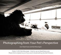photoing pets