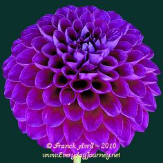 """HOLLYHILL PURELY PURPLE - 2"""""""