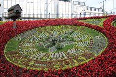 Die Edinburgher Blumenuhr 2014 im Princes Street Gardens