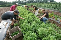 The research shows conversion to 100 percent organic farming could feed the world only if everyone became vegetarian and food waste was cut in half. Even then, it would face fertilizer and pest problems.